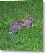 Happy Rabbit Metal Print