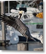 Harbor Pelican And Gull Metal Print