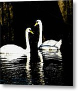 Harbor Swans Metal Print