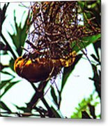 Hard Working Bird Metal Print