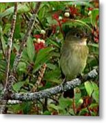 Hardly The Least Least Flycatcher Metal Print