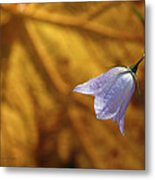 Hare Bell And Gold Leaf Metal Print
