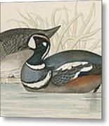 Harlequin Duck Metal Print