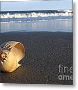 Harp Shell On Beach Metal Print