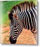 Hartman Zebra Metal Print
