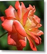 Harvest Rose Metal Print