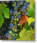 Harvest Time 2 Metal Print