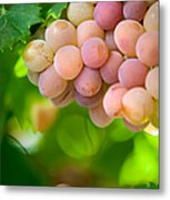Harvest Time. Sunny Grapes Viii Metal Print