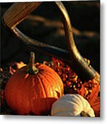 Harvesting For Thanksgiving Metal Print by Sandra Cunningham