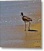 Hatteras Island Bird 8/24 Metal Print