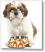 Havanese With Dog Bowl Metal Print