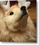 Have I Been A Good Doggie? Metal Print