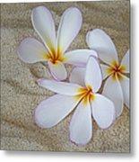 Hawaiian Tropical Plumeria Metal Print