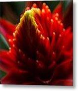 Hawaii Flower Macro Metal Print