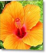 Hawaii Orange Hibiscus Metal Print