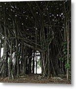 Hawaiian Banyan Tree - Hilo City Metal Print
