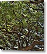 Hawaiian Banyan Tree Metal Print