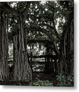 Hawaiian Banyan Trees Metal Print