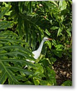 Hawaiian Garden Visitor - A Bright White Egret In The Lush Greenery Metal Print