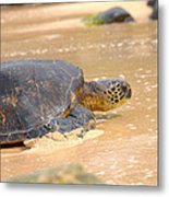 Hawaiian Green Sea Turtle 2 Metal Print
