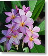 Hawaiian Lei Flower Metal Print
