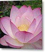 Hawaiian Lotus Metal Print