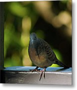Hawaiian Mourning Dove Metal Print