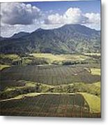 Hawaiian Pineapple Fields Metal Print
