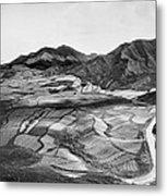 Hawaiian Pineapple Plantation Metal Print