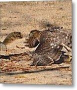 Hawk Attack Metal Print