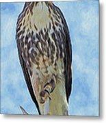 Hawk By Frank Lee Hawkins Metal Print