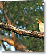 Hawk Metal Print by Debbie Sikes