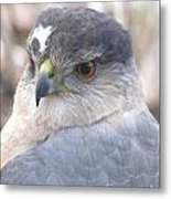 Hawk Eye 13528-3 Metal Print