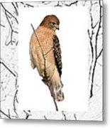 Hawk Framed In Branch Outline Metal Print