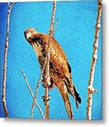 Hawk In A Glow Metal Print