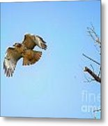 Hawk In Early October Metal Print