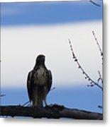 Hawk On Branch Metal Print
