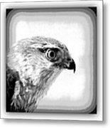 Hawk - Raptor Metal Print
