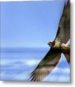 Hawk - Screams Of The Ocean Metal Print