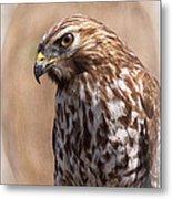 Hawk - Sphere - Bird Metal Print