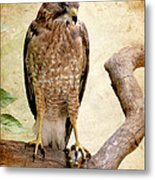 Hawk With Fish Metal Print