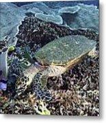 Hawksbill Sea Turtle Metal Print