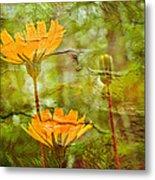 Hawkweed Wildflower Metal Print