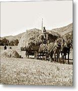 Horse-drawn Hay Wagon Carmel Valley California Circa 1905 Metal Print