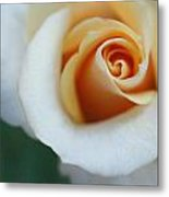 Hazy Rose Metal Print