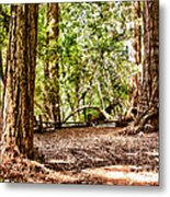hd 379 hdr - Henry Cowell 2 Metal Print