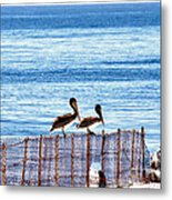 hd 383 hdr - Two Pelicans Metal Print
