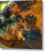 Hdr - Fish Metal Print
