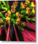Hdr - Flowers Up Close Metal Print