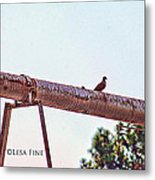Hdr Dove On A Pipe Metal Print
